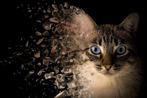 cat background handling