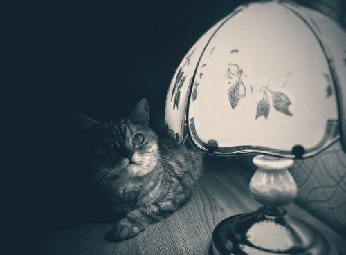 cat lamp noir