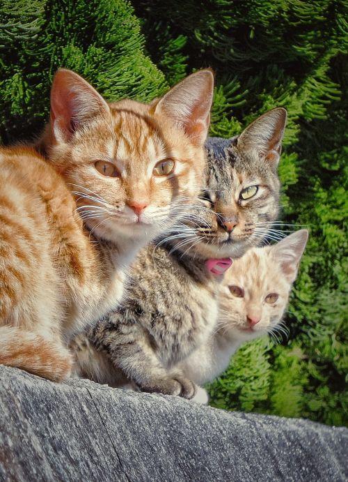 cat group three
