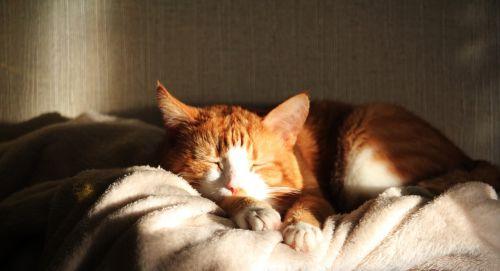 cat sleeps nicely