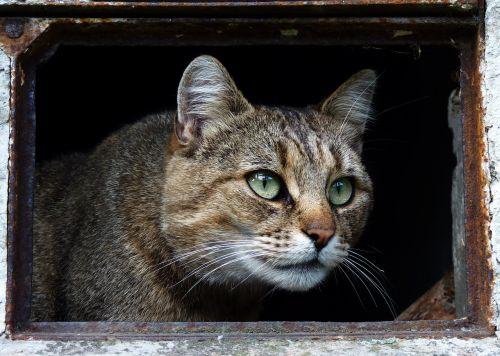 cat animal domestic cat