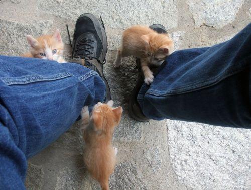 cat play sweet