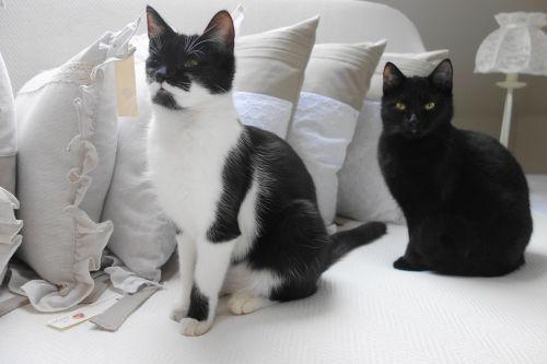 cat cats gourmand