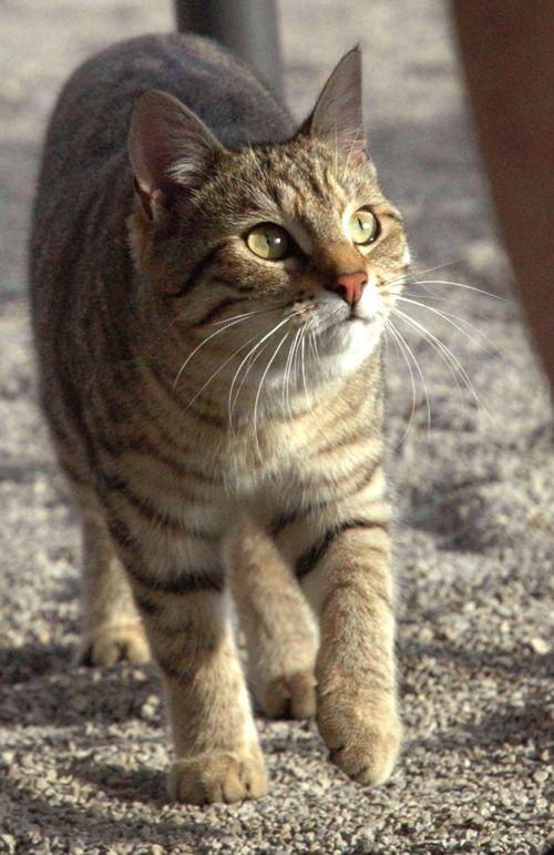 cat mackerel watch