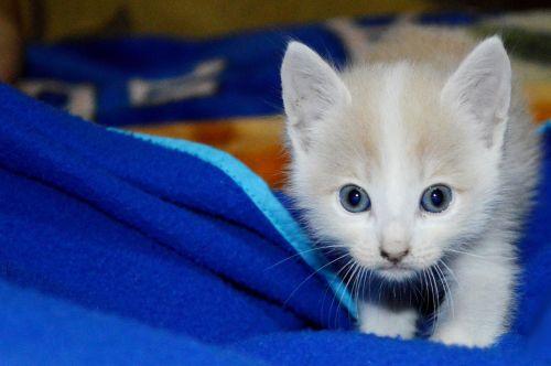 cat kitten pussycat