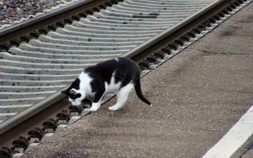 cat mieze seemed