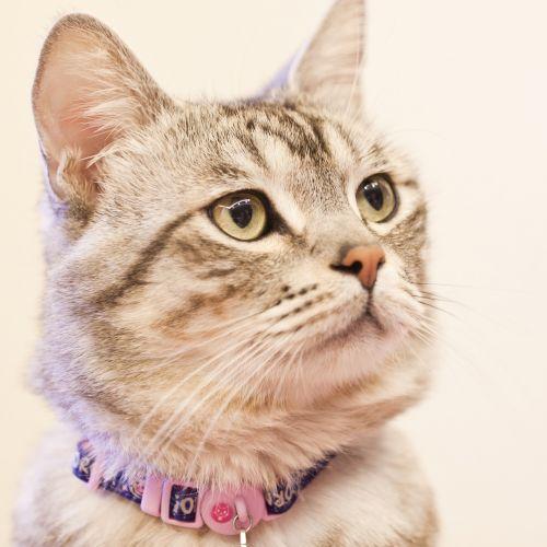 cat gaze wait