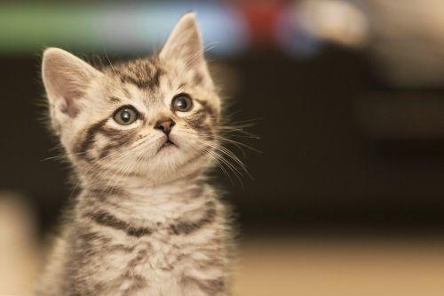 katė,troškimas,grynas