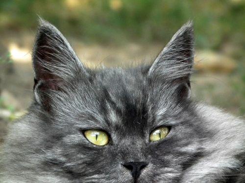 cat cat's eye cute