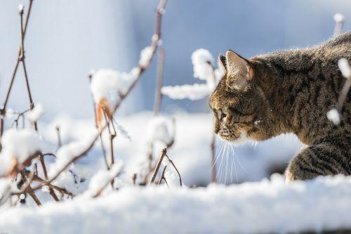 cat winter snow