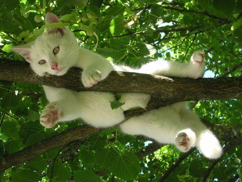 cat nature relax