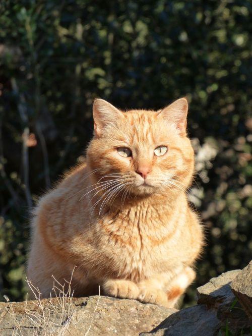 cat feline blond