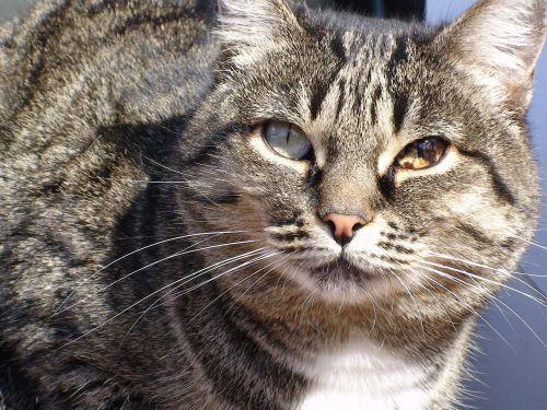 cat cats pet