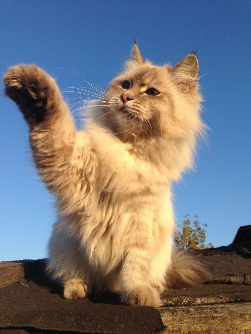cat housecat pets