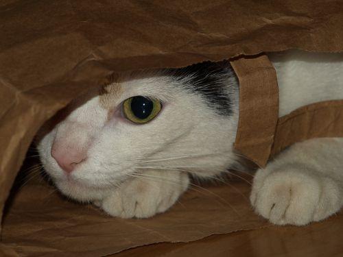 cat bag shelter