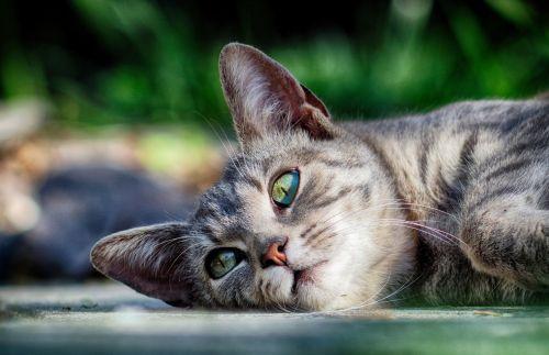 cat rest kitten