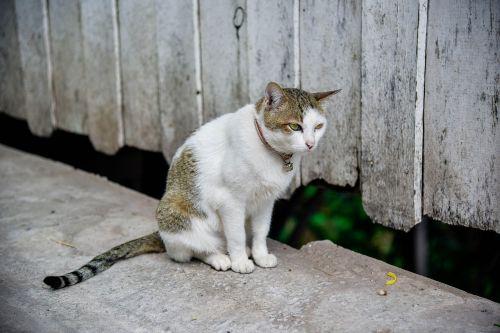 cat temple cat cute