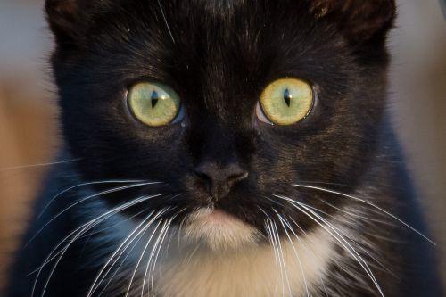 cat portrait close