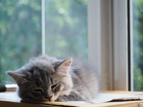 cat asleep sleep