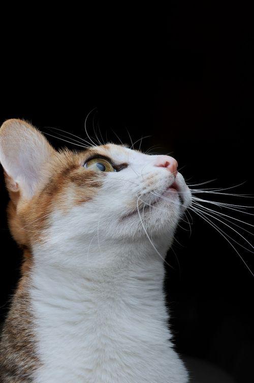 cat pet looked up