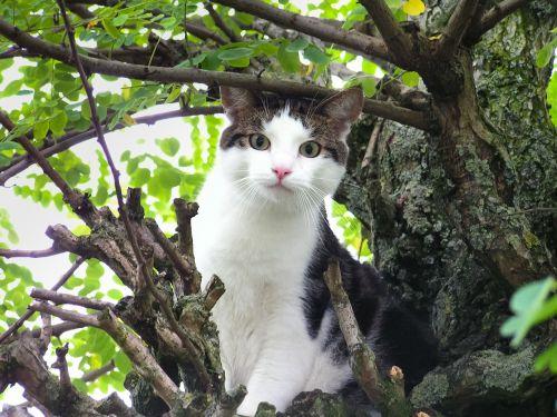 cat stuck tree