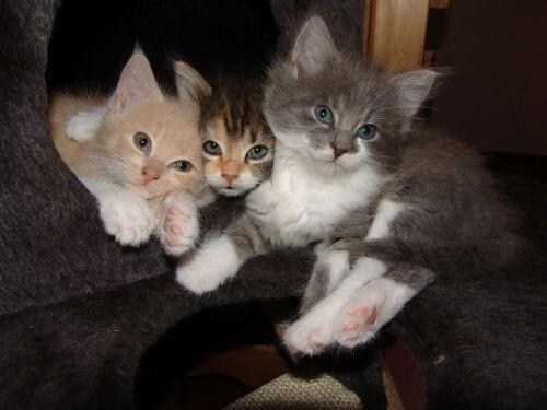 cat babies trio