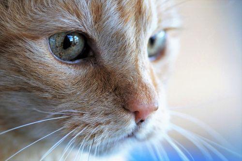 cat head tomcat