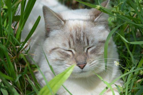 cat sleeps asleep