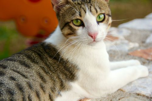 cat animal stray
