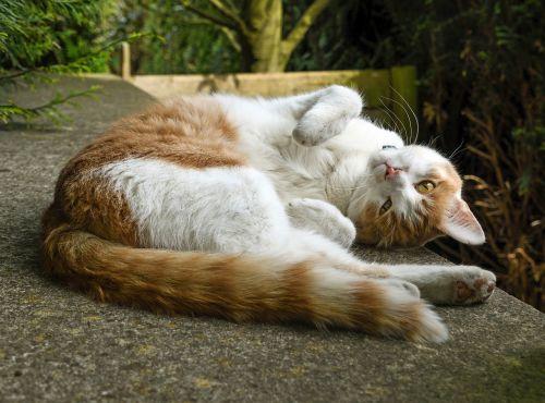 cat lying lounge