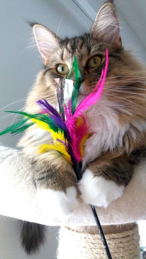 cat whisk