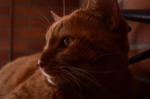 cat natsumi feline