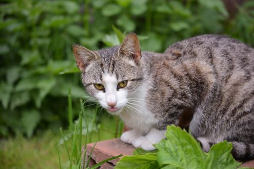 cat curious lurking