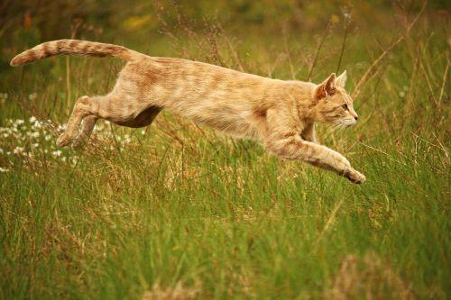 cat jump mieze