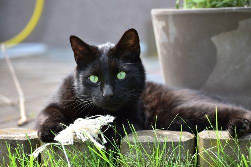 cat beast pet