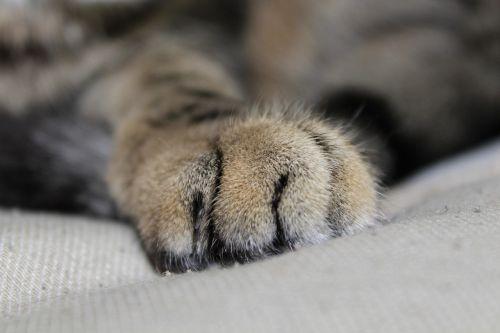 cat paw paw print