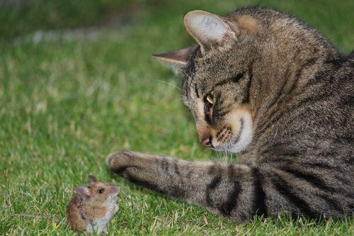 cat mouse catch