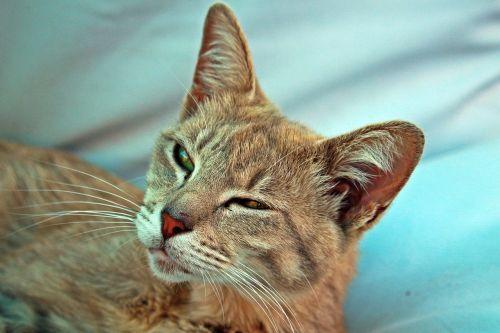 cat mackerel tiger cat