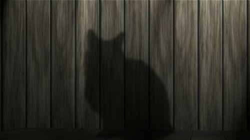 cat black cat power