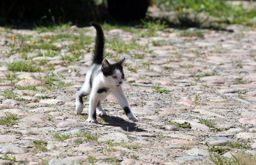 cat puppy kitten