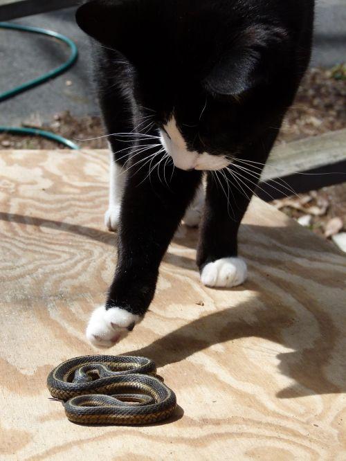 cat snake felix