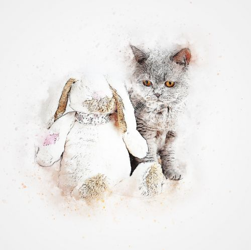 cat grey pet