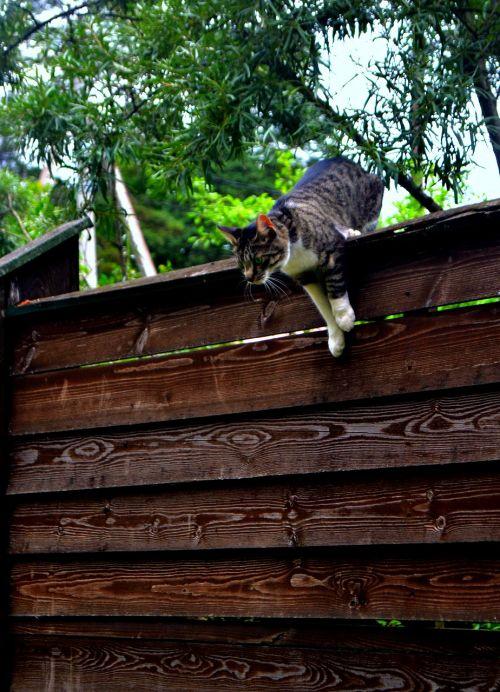 cat fence jump