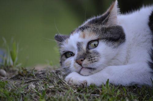 cat lurking nature