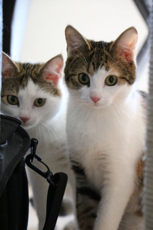 cat animal kitten