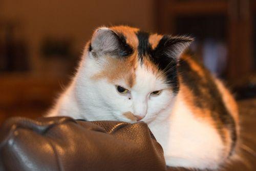 cat mammal pet