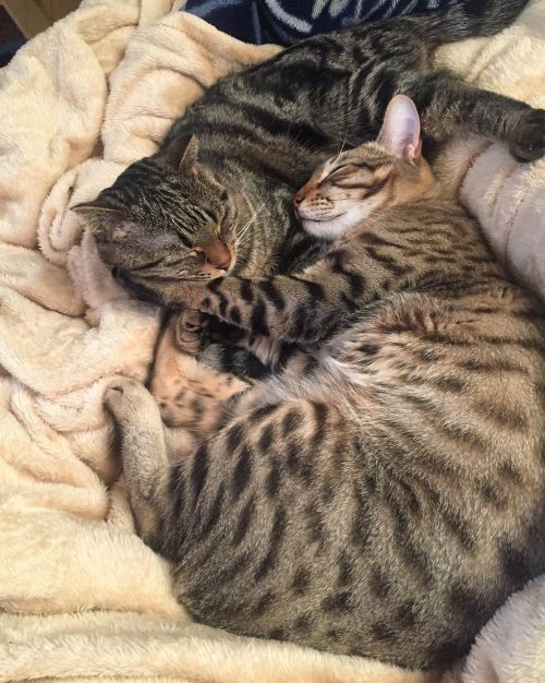 cat kitten kitty