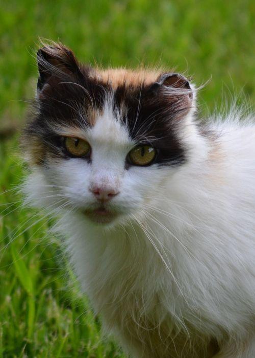 cat barn cat calico cat