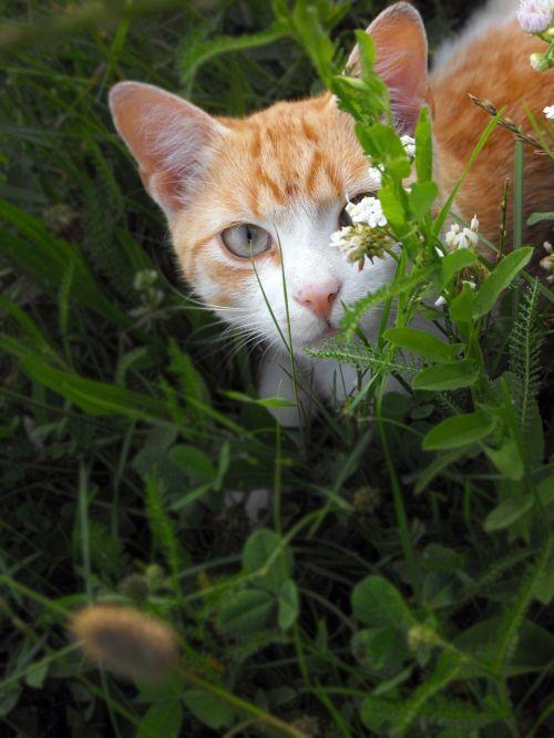 cat tomcat hidden