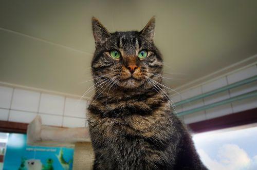 cat shelter amsterdam